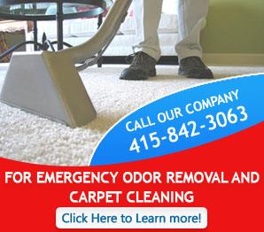 Our Infographic | Carpet Cleaning Novato, CA